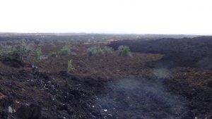 ハワイ島の今 ハワイ旅行記 溶岩の黒い岩